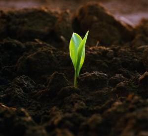 Как сделать плодородную почву
