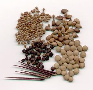 semena1